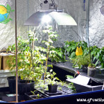 Coolock-Grow-Tent1